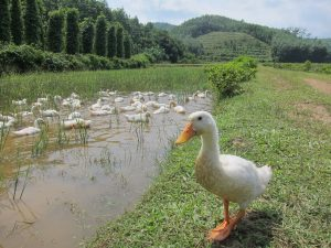 Duck Stop