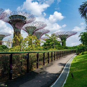 Gardens by the bay סינגפור
