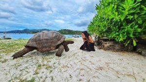 ביקור באי הצבים- Curieuse Island